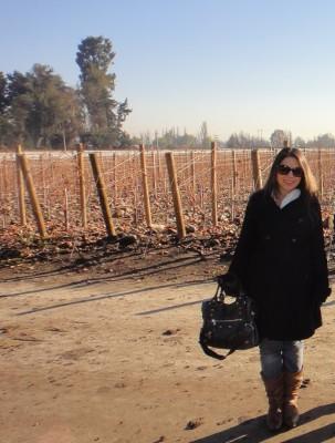 Vinícola Almaviva nos arredores de Santiago no Inverno de 2011